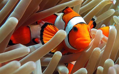 Duiken en snorkelen bij Raja Ampat