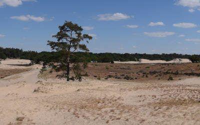 Loonse en Drunense duinen: de Brabantse Sahara