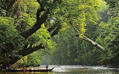 Wandelen in het Taman Negara Nationaal Park