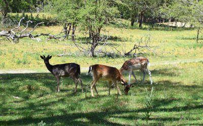 De waterleidingduinen bij Vogelenzang: wild spotten