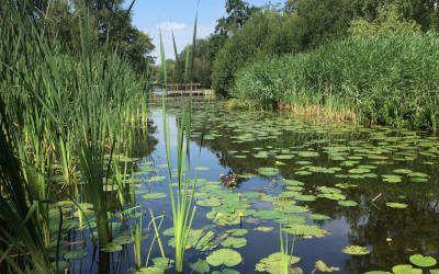 Wandeling door Amsterdamse Bos en het sjieke Amsterdam Zuid