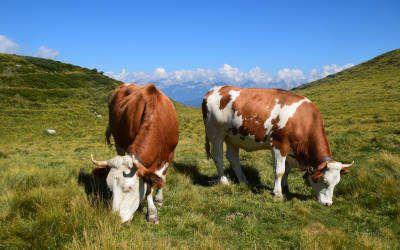 Wandeling langs de Kalkkögel, de Dolomieten van Tirol