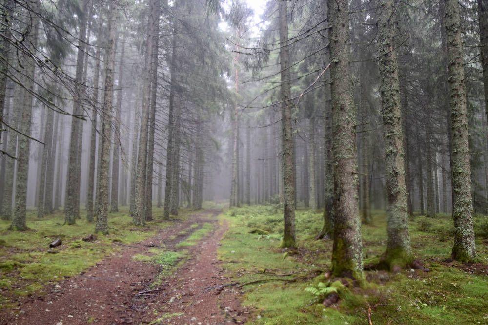 Zwarte Woud, Duitsland