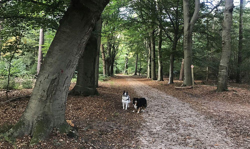 Honden in Den Treek