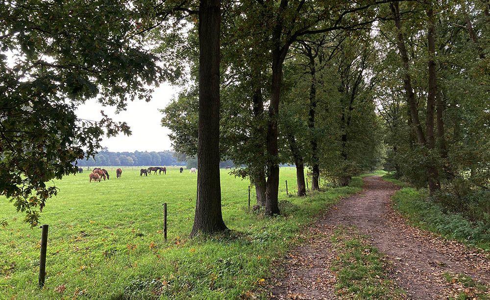 Paardenwei in Soest