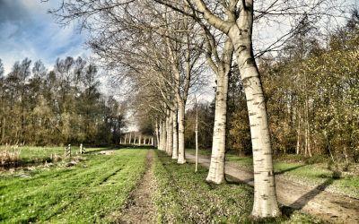 Wandeling door het Diemerbos: stille paadjes in de Randstad