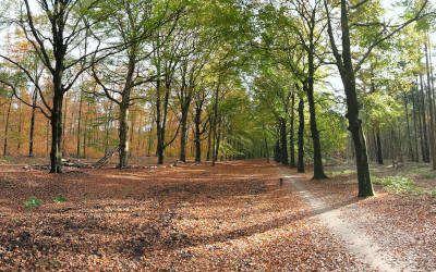 Fraaie herfstwandeling bij Hollandsche Rading