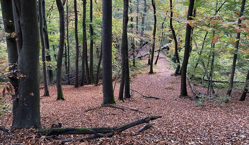 Hersftbos tussen Berg en Dal en Beek-Ubbergen