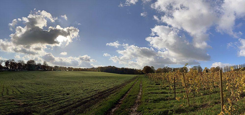Wijngaard in Berg en Dal