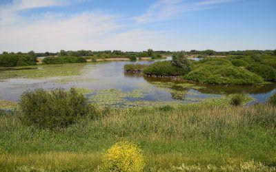 Wandeling bij Zaltbommel en de Hurwenense uiterwaarden