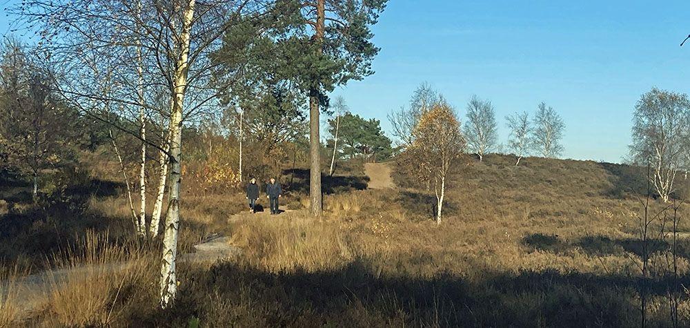 Heide bij het Zwolse Bos