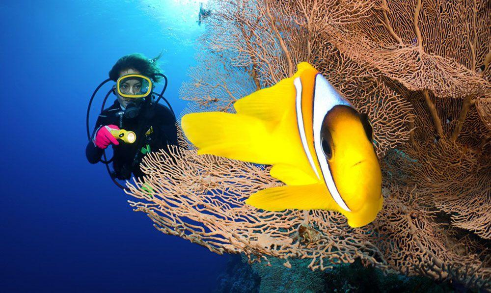 Anemoonvis bij de Malediven