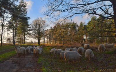 Wandeling in Nationaal Park Dwingelderveld vanuit Spier