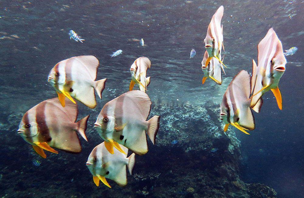 Zachte koralen in Raja Ampat, Indonesië