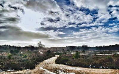 De heide bij Laren en Hilversum, een fijn wandelgebied