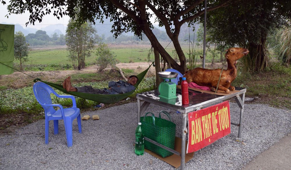 Geroosterde geit in Vietnam