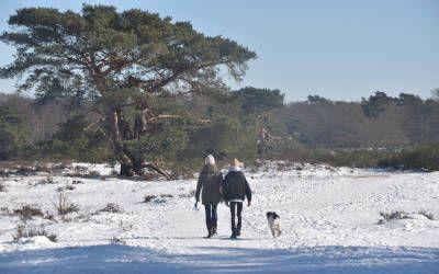 Wandeling in het Gooi vanuit Crailo: alle seizoenen mooi!