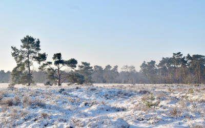Wandelen over Landgoed Den Treek-Henschoten