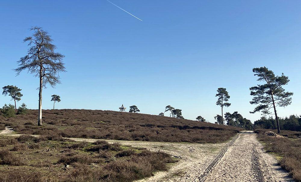 Heide in NP De Maasduinen
