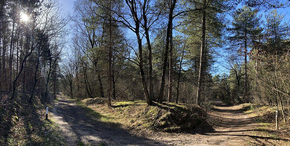 Loof- en naaldbossen in NP De Maasduinen