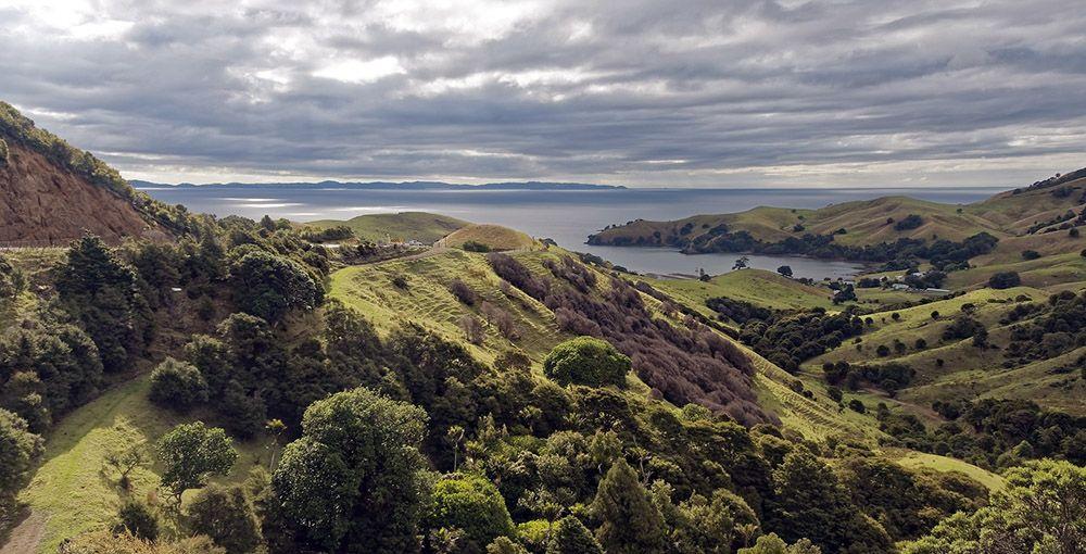 Glooiend, heuvelachtig landschap bij de Coromandel op het Noordereiland van Nieuw-Zeeland