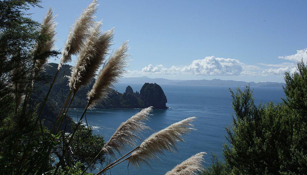 Uitzichtspunt bij de Coromandel op het Noordereiland van Nieuw-Zeeland