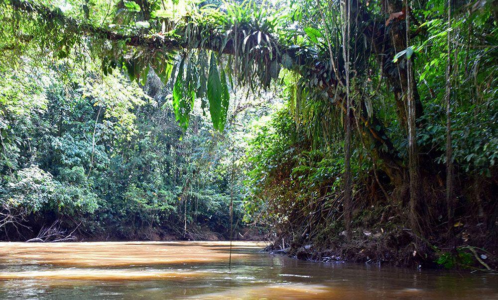 Rivier in het regenwoud bij Cuyabeno Reserve.