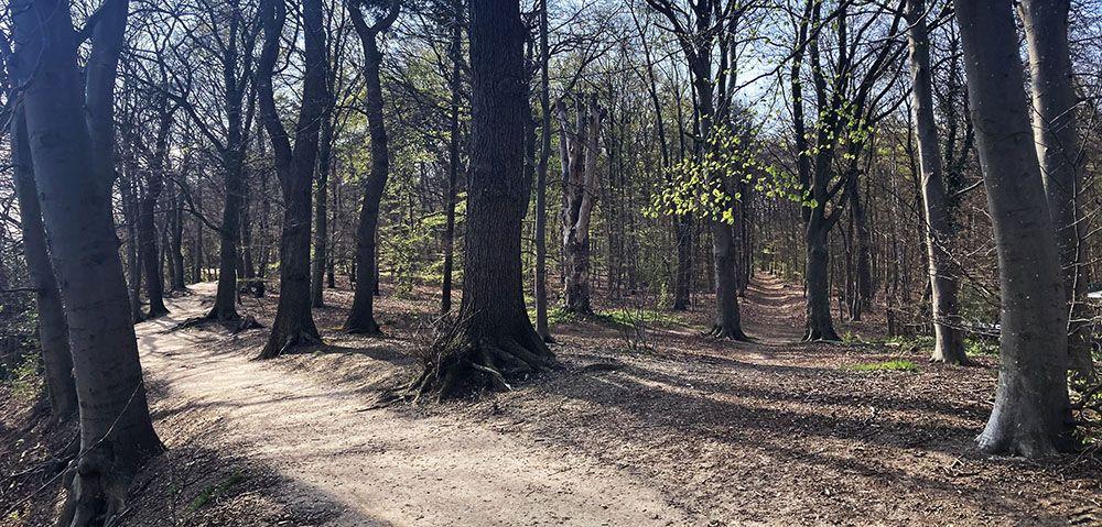 Gevarieerde wandeling bij vestingstad Wageningen