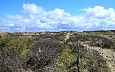 Wandeling bij Noordwijk: de prachtige zandhagedisroute