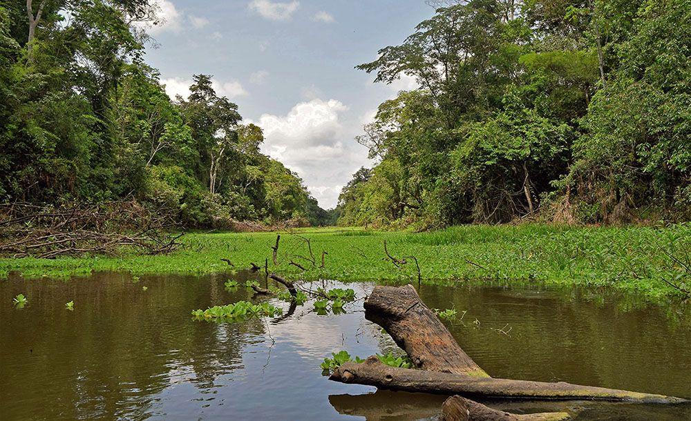Met waterplanten begroeide rivier in Muyana Reserve