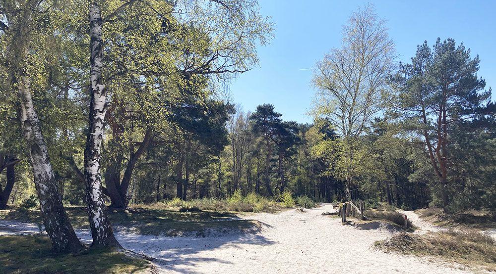 Gevarieerd bos bij de Brunssummerheide
