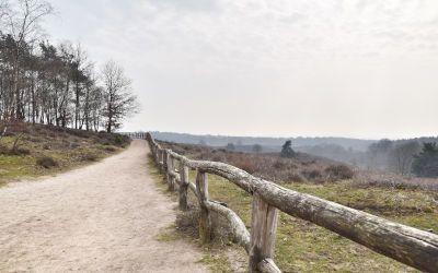 Wandeling naar de Posbank in Nationaal Park Veluwezoom