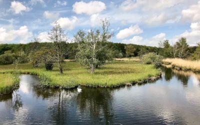 Wandeling bij Amstelveen: Amsterdamse Bos en de Poel