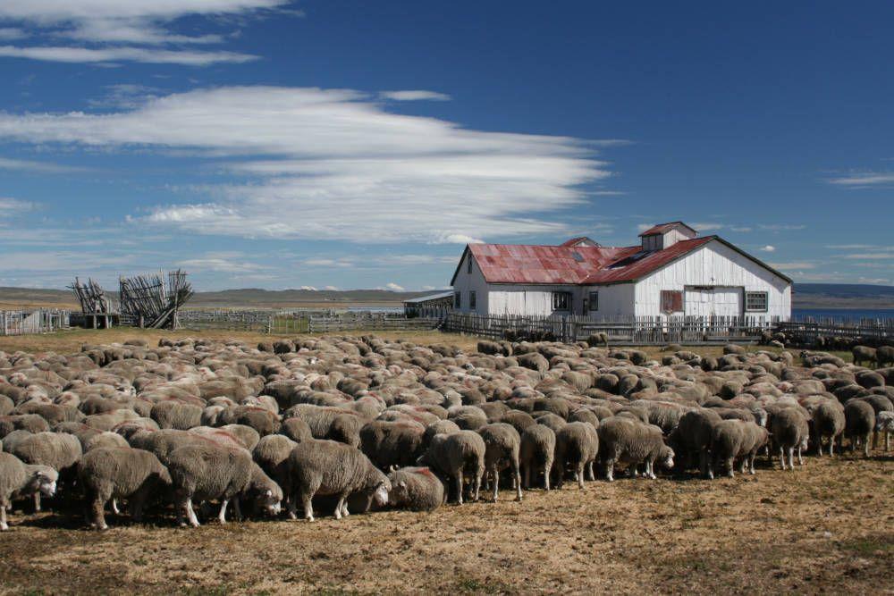 Lauca National Park in Chili kent hoge bergtoppen