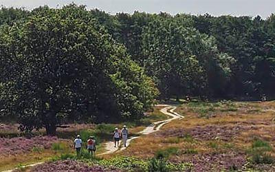 Heidegebieden in Nederland