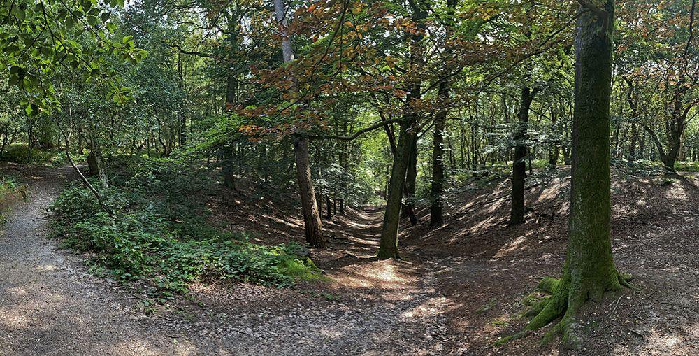 In het bos op de Grebbeberg