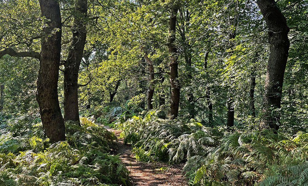 Bos bij Rhenen
