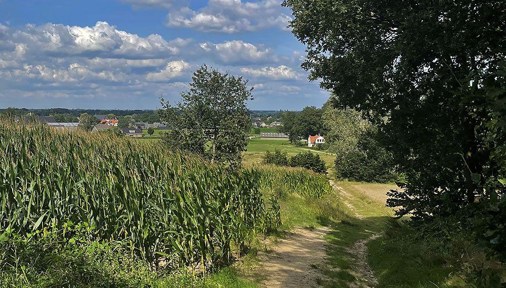Laarsenberg bij Rhenen